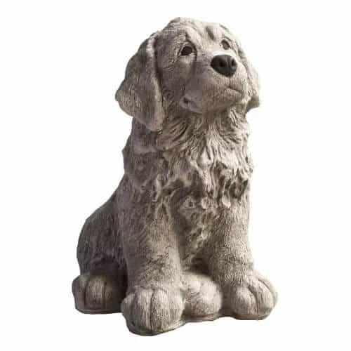 1131 bernersenne pup