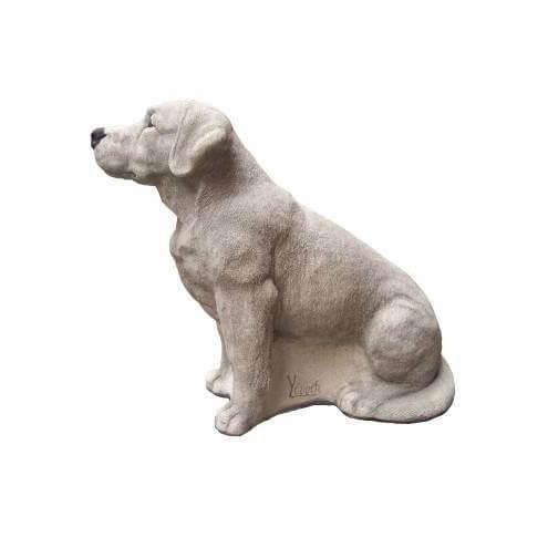 1330 Labrador retriever zittend