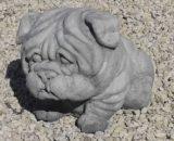 307 engelse bulldog