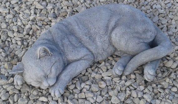 319 slapende kat