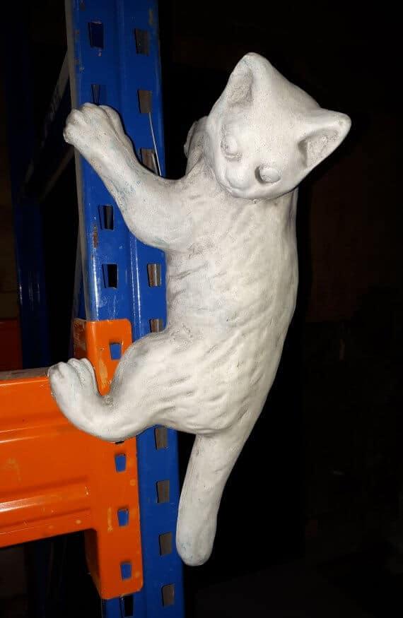 384 klimmende kat a
