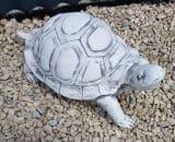 Z 70 schildpad