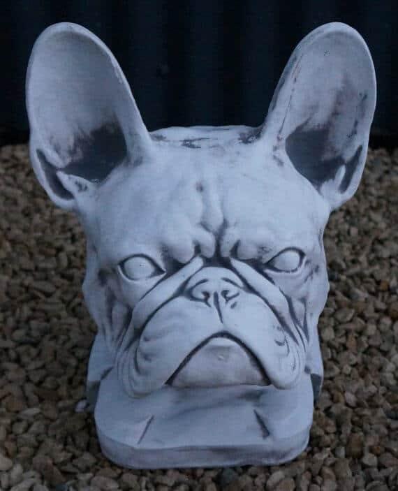 Z 84 kop franse bulldog