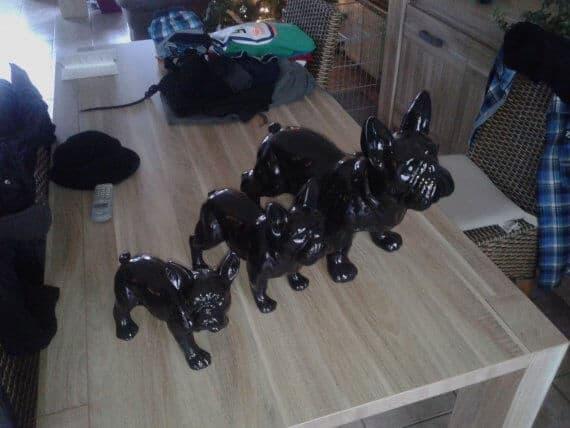 franse bulldog 3 modellen