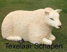 texelaar_schapen