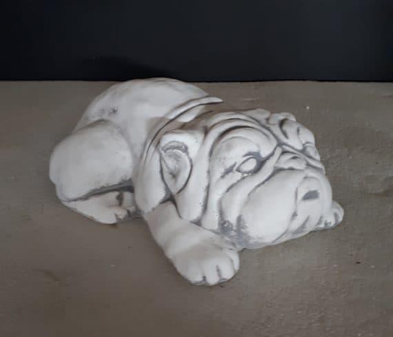 Z30 engelse bulldog