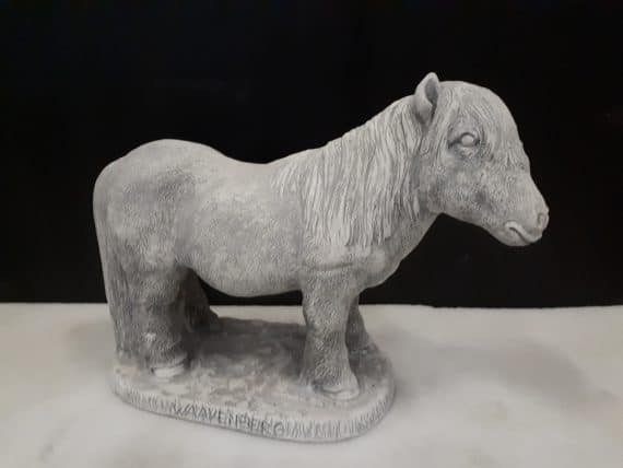 way 484 chetland pony