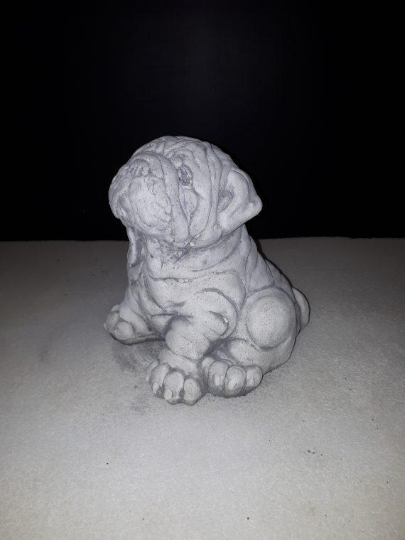 394 engelse bulldog pup