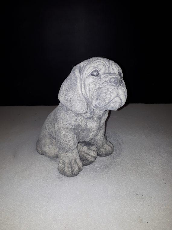 395 bordeaux dog pup