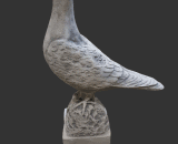 Z311 duif